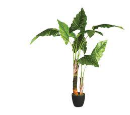 Bananier Vert