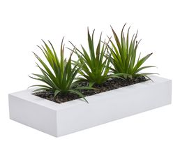 ALOE VERA Centre de table Blanc
