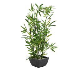Bambou BAMBOU Vert