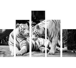 Set de 5 toiles 150X100 TIGER Noir-blanc